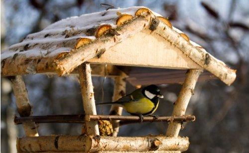 Dokarmiamy ptaki- oddział I