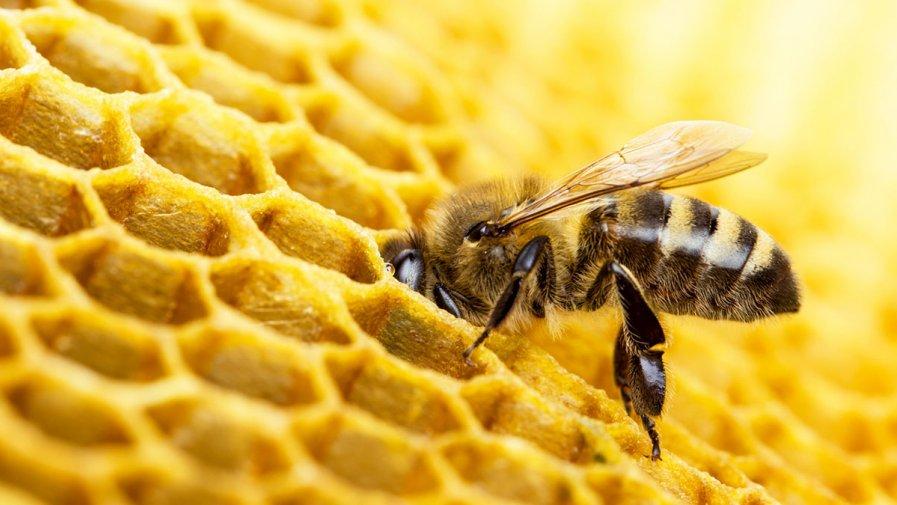 W świecie pszczół- oddział III
