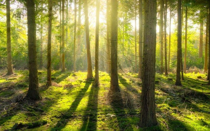 Drzewa- oddział III