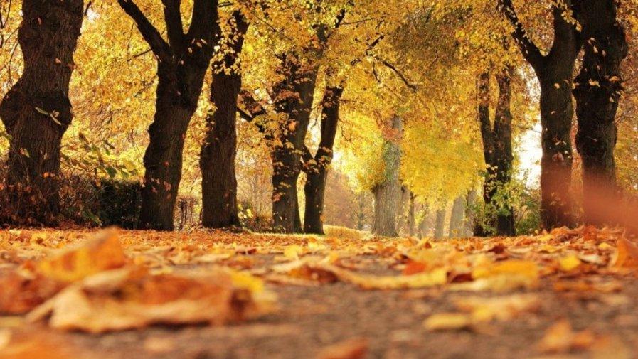 Jesienią w parku- oddział III