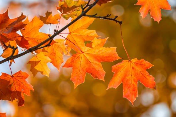 Jesień w lesie i w parku- oddział II
