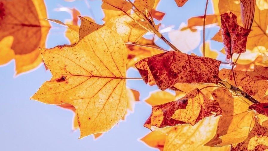 Zabawy z jesienią- zajęcie otwarte- oddział IV